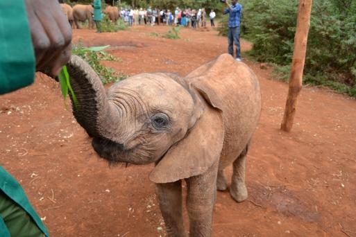 Ashaka, my first adopted elephant orphan